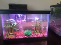2.5 gallon fish tank with everything included