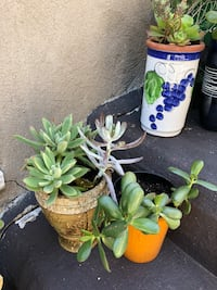 Potted green succulent plants Los Angeles, 90026