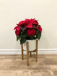 Modern Plant Stand with Ceramic Pot and Poinsettia