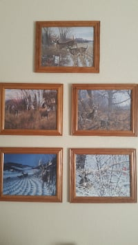 Survivor Series - Michael Sieve  Whitetail Deer Framed Prints  Las Vegas