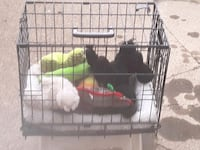 Pet carrier and toys