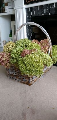Dried hydrangeas in basket  Milton, L9T 7V7