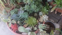 A beautiful array of succulent plants