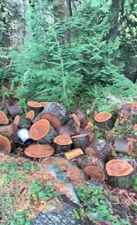 Lots of bucked up firewood