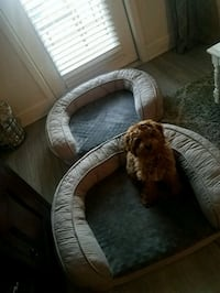 27x36x8 quilted couch dog bed Savannah, 31401