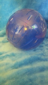 X-Lrg Pet exercise ball   Milton, L9T 1R7
