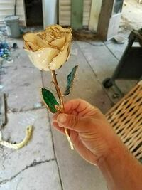 Real rose dipped in 24k gold so it'll last forever Galena Park, 77547