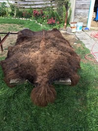 Brown and black buffalo rug I am open to offers North Perth, N0K