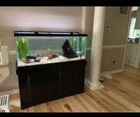 Stand for 75 gallon fish tank Centreville, 20120