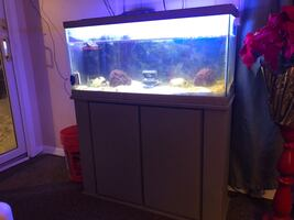 Nice 40 gallon tank and stand