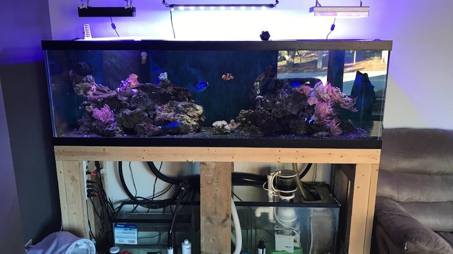 Steel tank for sale only 4 left at 60 for Used fish tanks for sale on craigslist