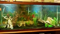 Fish tank w/ filter and accesories 183 mi
