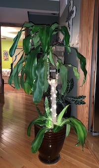 Tropical Plant with brown ceramic pot & timer string lights 4 ft tall