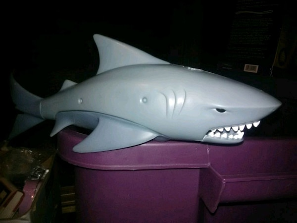 Shark that swims in the water