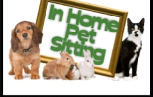 Pet sitting (negotiable)
