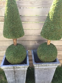 Two topiare's in tin pots purchased at Florae of Westmount payed over 1000$ Montréal, H2S 1C6