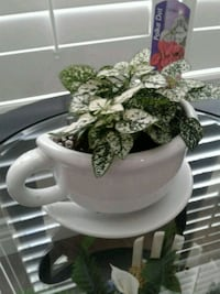 Unique half cup with polka dot plant Kitchener, N2K 4J7