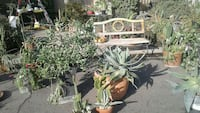 Plant Sale and garden bench.