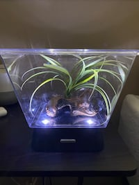 Betta fish tank 1 Gallon with LED Lighting and decoration