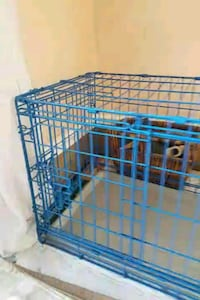 Dog Training Crate (Small-Medium) Silver Spring, 20905