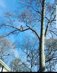 tree and leaf removal Stafford, 22556