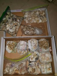 Shoebox of shells Toronto, M1P 2N1