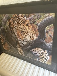 Large Framed Jaguar Photo Hanford, 93230