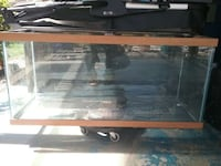 75 gallon tank, water chiller, pump and filter