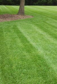 Lawn care Old Fort