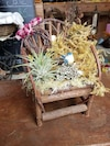 Wooden mini armchair with succulent plant