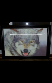 Wolf pictures  Sarnia, N7S