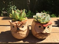 Succulent plants in owl pots - small Richmond Hill, L4B 4H1