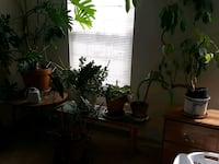 LARGE plants need a home Aurora, 80013