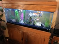 75 Gallon Fish Tank and Solid Wood Stand Skokie, 60077