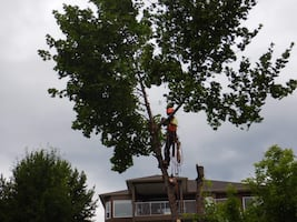 * Fall yard clean up/ tree service