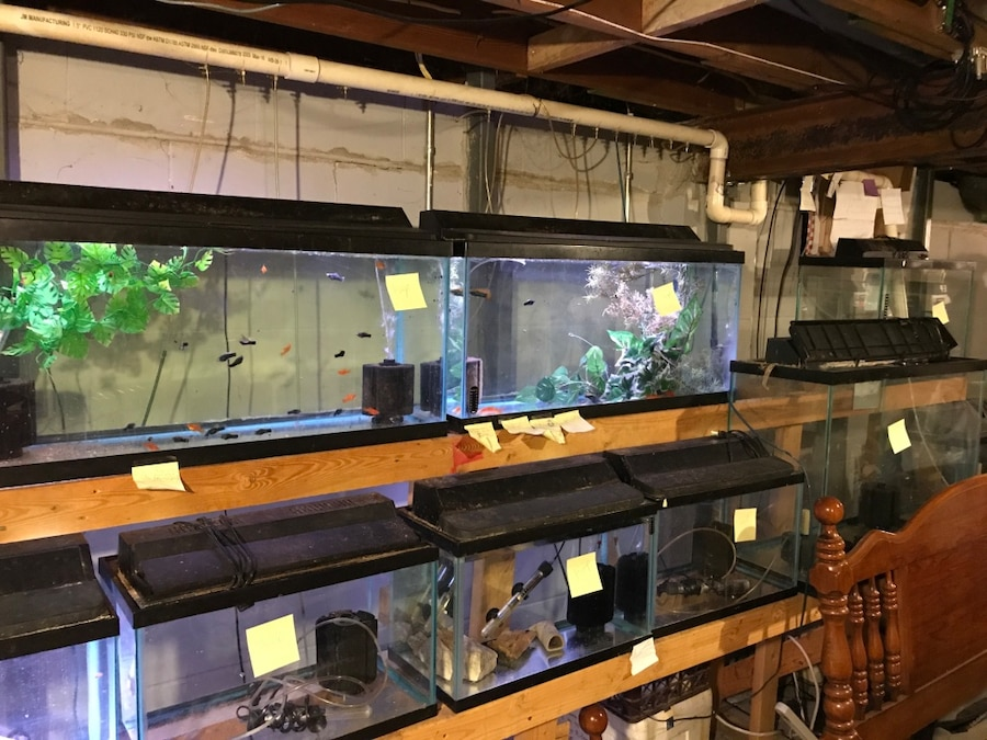 Used fish tanks for sale in hartford town for Used fish tanks for sale many sizes