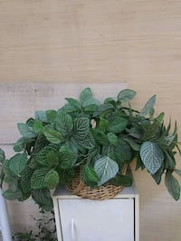 beautiful green leafy artificial plant in a very sturdy basket New Albany, 47150