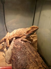 Exotic Pet Sitting Ogden