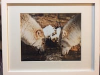 Framed and matted wolf photography East Hanover, 07936
