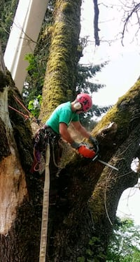 Tree Service and Removal Lowell