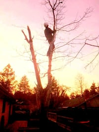 Tree trimming and Removal Eugene