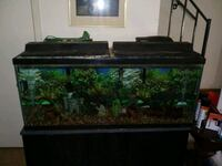 rectangular black framed fish tank Odenton, 21113