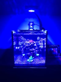 10gal FLUVAL all in one Nano set up! OVER $950 value. 3MONTHS OLD!Heater,Top,skimmer,Filter,top,live rock Pelham Manor, 10803