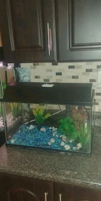 10 gallon fish tank Toronto, M1X 2A4