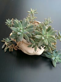 green succulent plant with white ceramic pot
