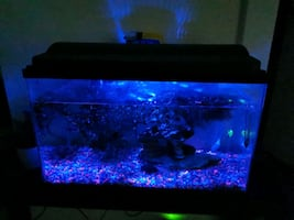 Aquarium set w fish  10 gal.