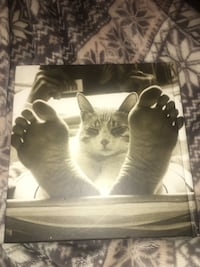 The BIG Book of Cats (J.C. Suares) Hackettstown, 07840
