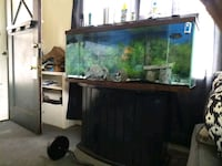 55 gallon fishtank with stand fish included