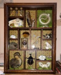 Taxidermy Display and Case