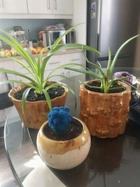 3 assorted plants  Laval, H7G 1G2